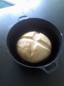 Today's Sourdough Bread, about 1/2 through its rise